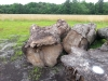Large Diameter Old-Growth Maple Logs/Slabs/Lumber (MD)