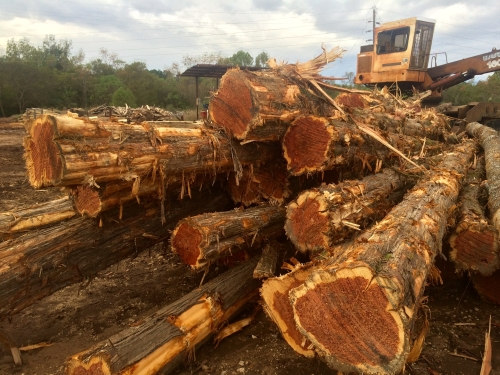 Buying Cedar logs for $60 - $90 a ton (Alto, TX) - Logs ...